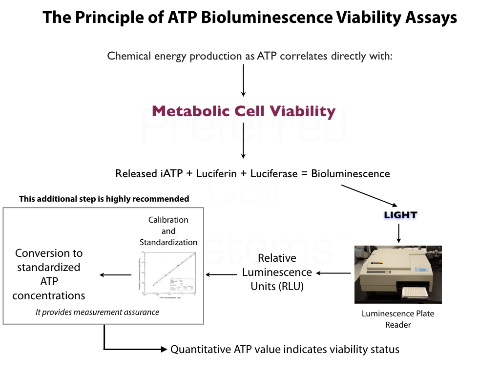 Principle of ATP Bioluminescence Metabolic Viability Assays