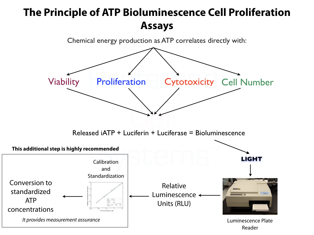 Principle of ATP Bioluminescence Cell Proliferation Assays