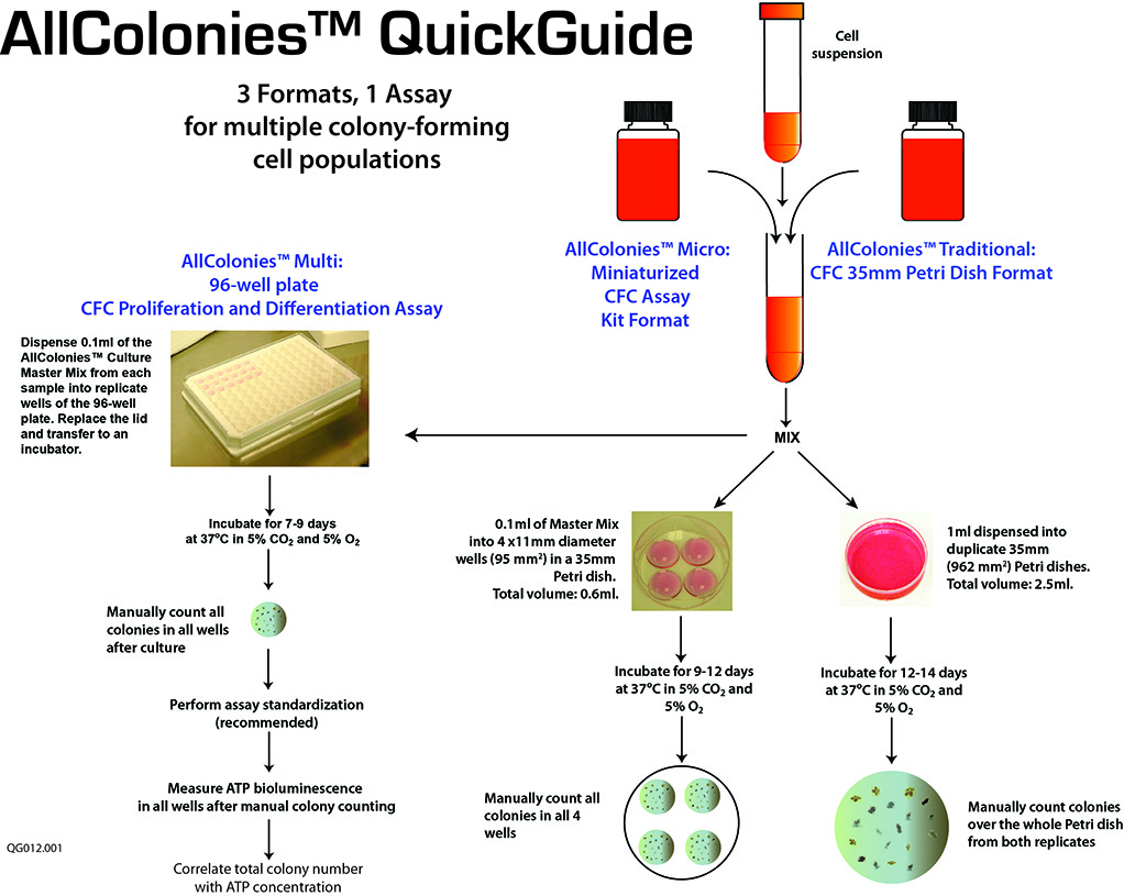 AllColonies™ Traditional, Micro or Multi: Detection of primitive hematopoietic stem cells