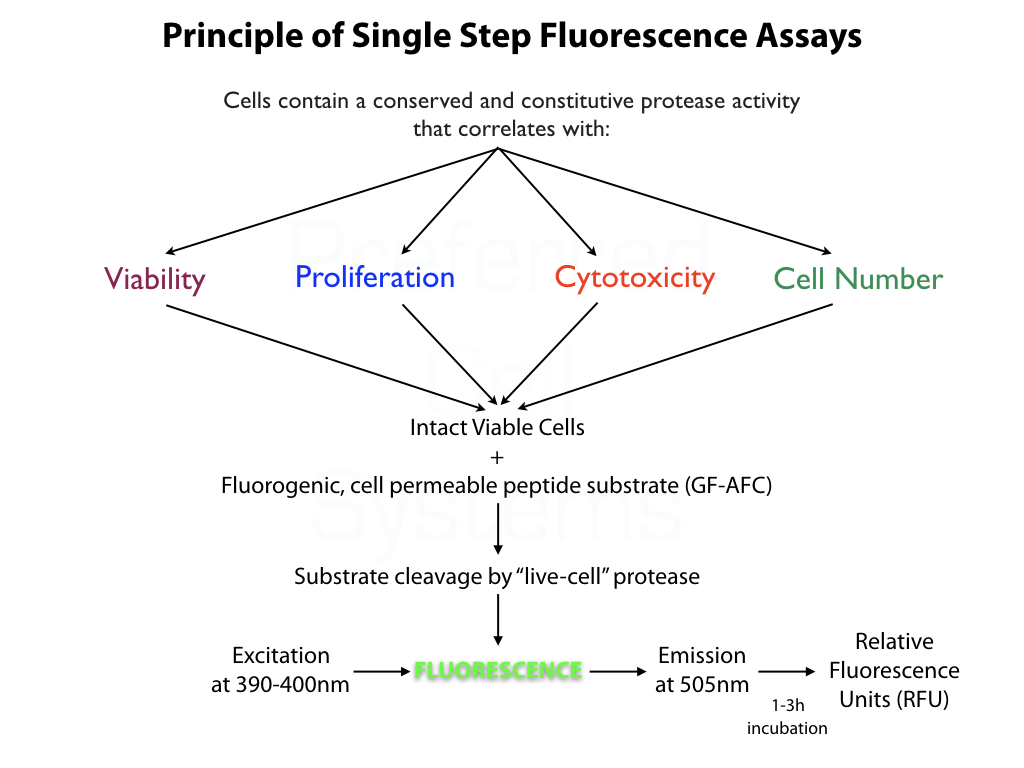 Principle of Fluorescence Cell Proliferation Assays