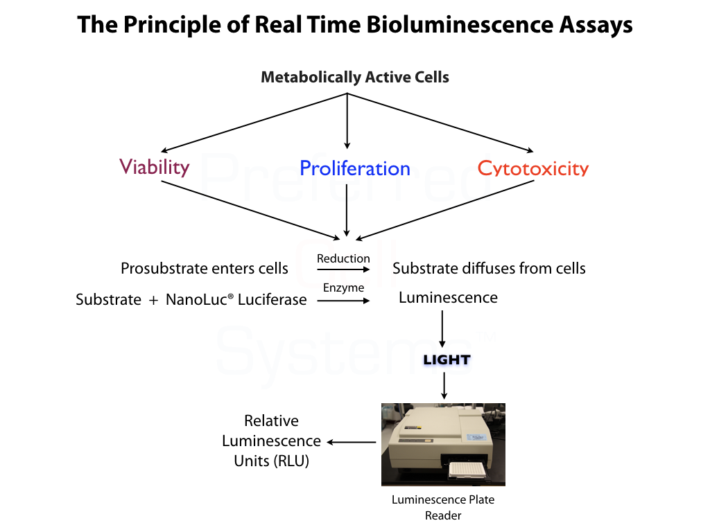 Principle of Real Time Bioluminescence Cell Proliferation/Cytotoxicity Assays
